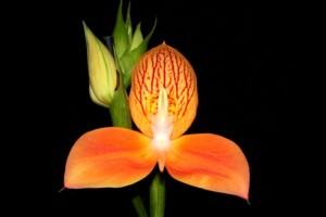 Die Orchideenausstellung 2020